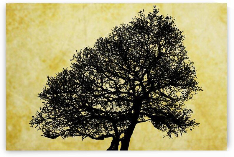 Nature - XLI by Carlos Wood
