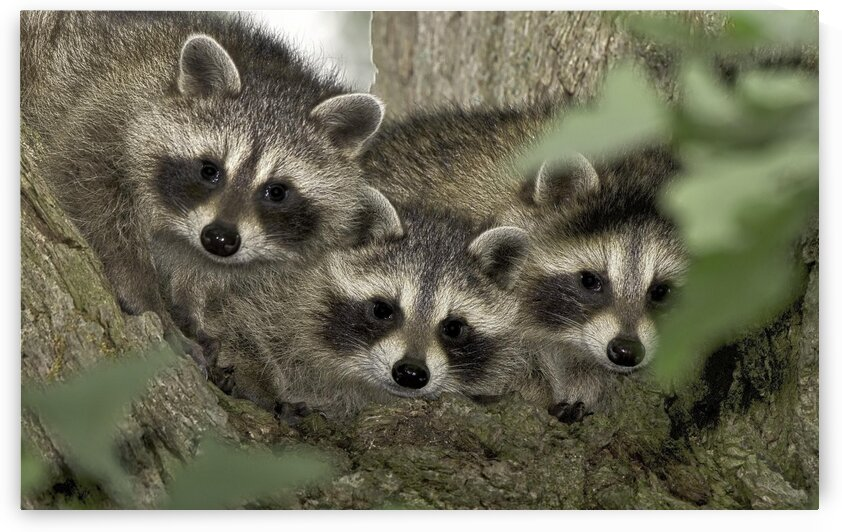 Three Amigos by Chris Seager