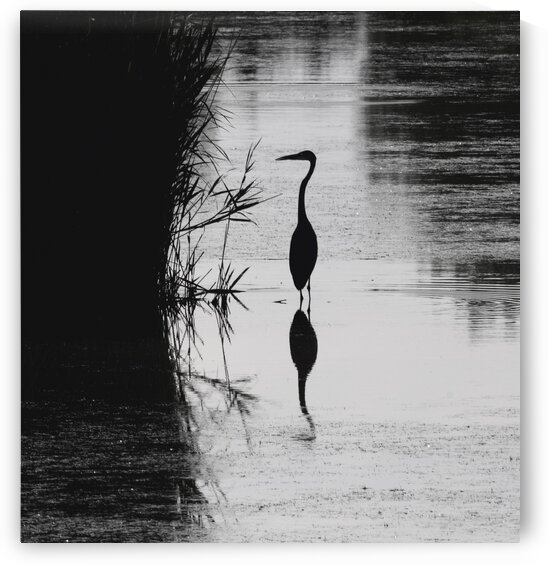 Heron Silhouette by Chris Seager