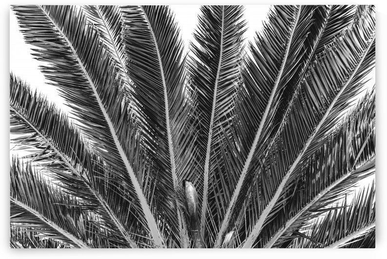 PALM ARMS 1 by BCALI