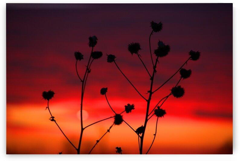 Missouri Sunset part 2 by Bern E King Photography