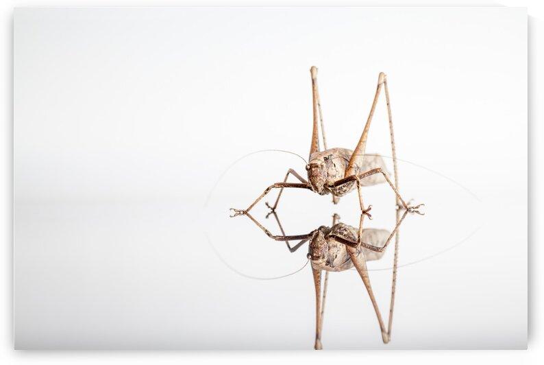 An Grasshopper by Marcel Derweduwen