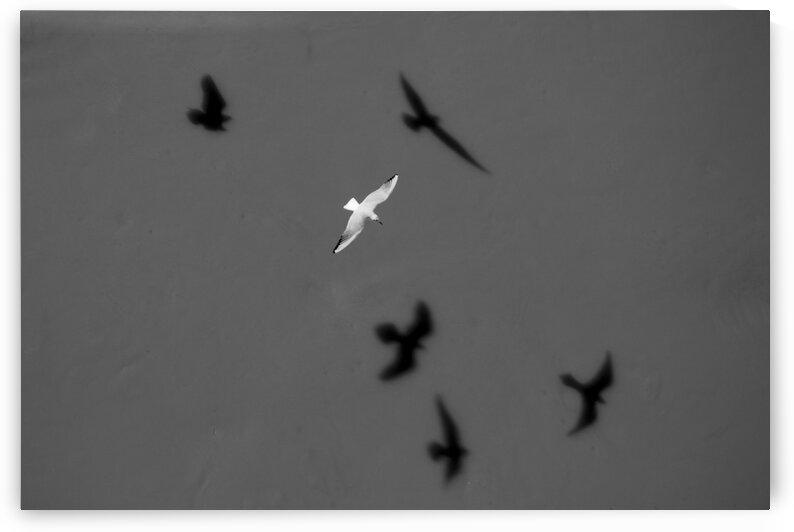 Bird and Shadows by Arash Azarm