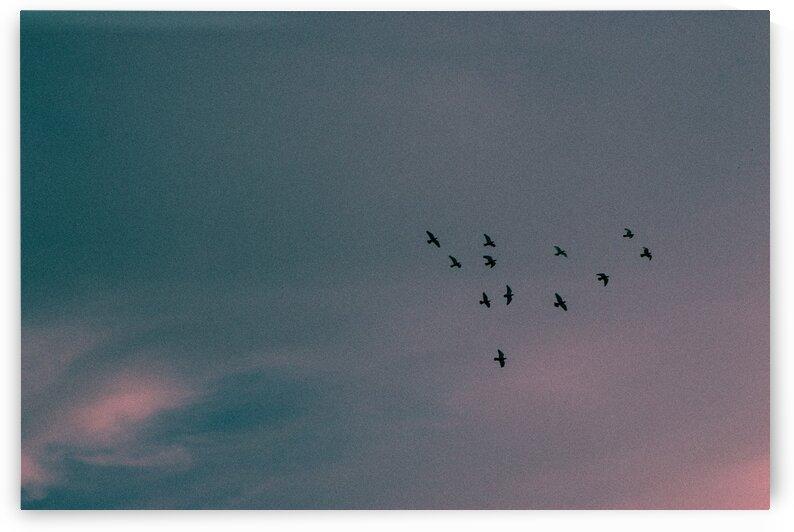 Flock of birds by Arash Azarm