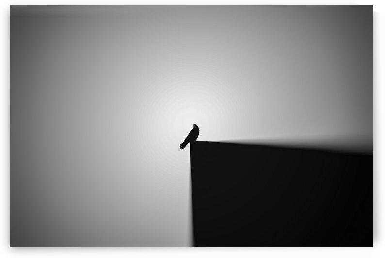 bird alone by Arash Azarm