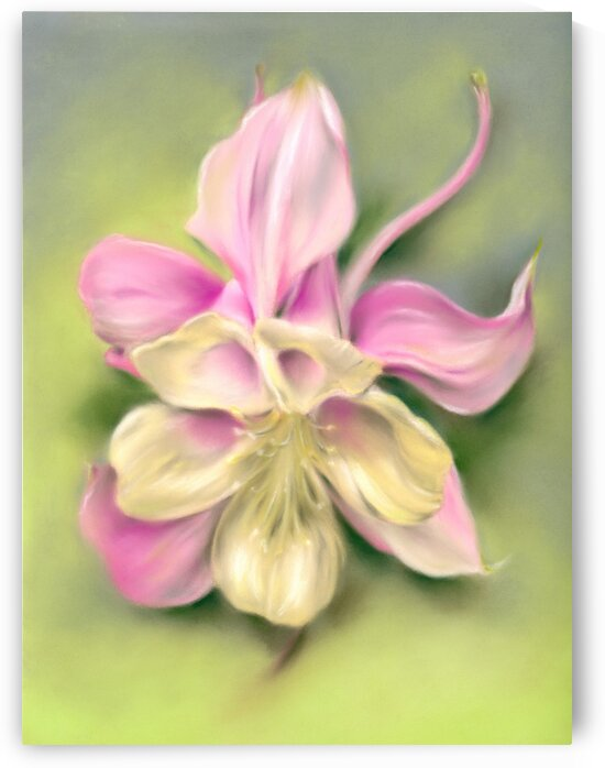 Columbine Blossom Pink and Cream on Green by MM Anderson