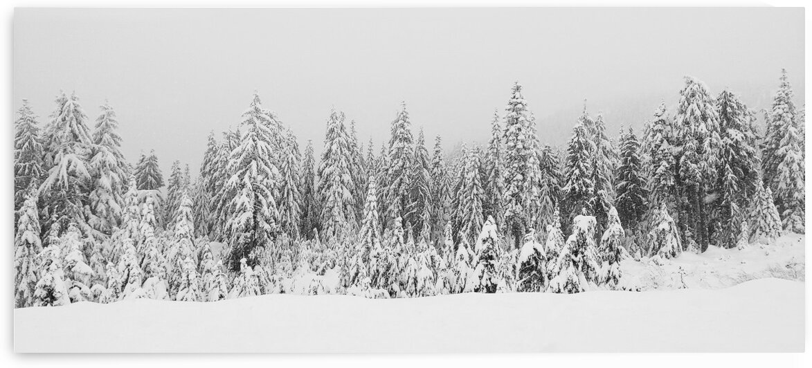 WINTER AT SEYMOUR by Nat