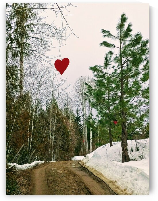 HEARTS IN THE TREES by Nat