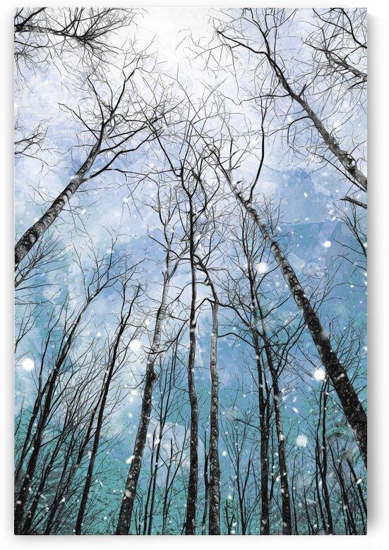 Winter Trees  by Carmel Studios