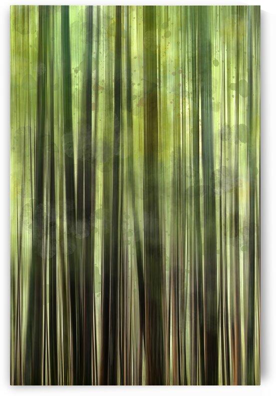 Tree Growth by Carmel Studios
