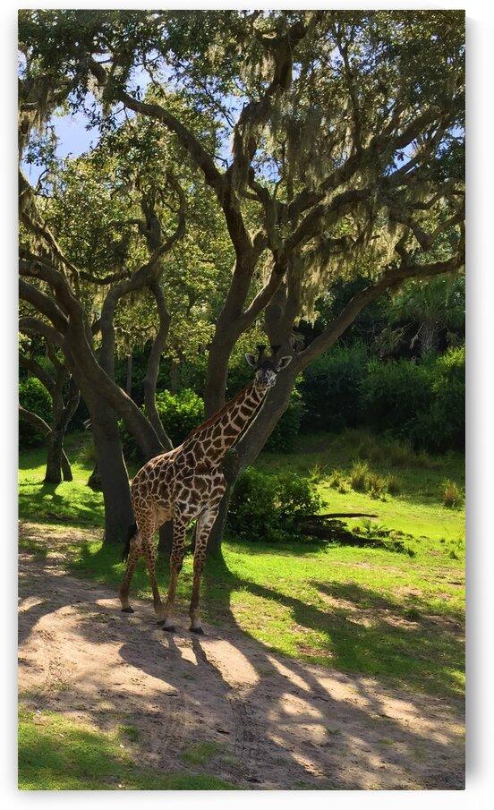 Giraffe by Earlene Mcclain/ Darren