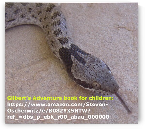 Childrens Book - Gilberts Adventure by Creative Endeavors - Steven Oscherwitz