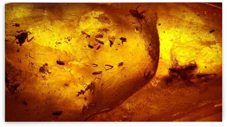 Ancient Insects Trapped in Amber by Creative Endeavors - Steven Oscherwitz