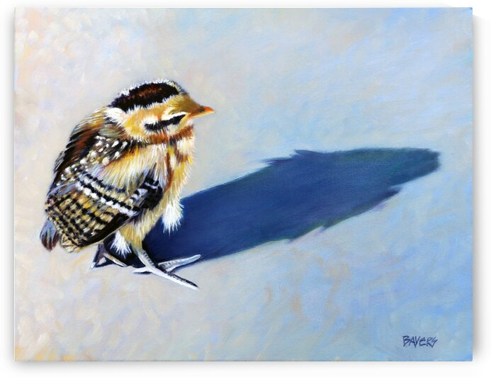 Baby Chick with Blue Shadow by Rick Bayers