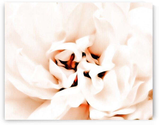 White Flower by Cammie Rayas