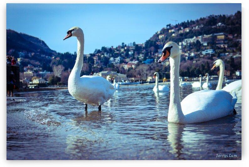 Ducks at Como Lake by Jerrys Studio