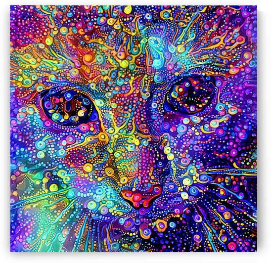 Jazzy The Colorful Tabby by HH Photography of Florida