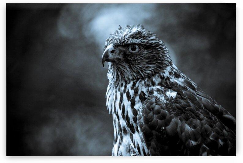 Falcon by Coolbits Art
