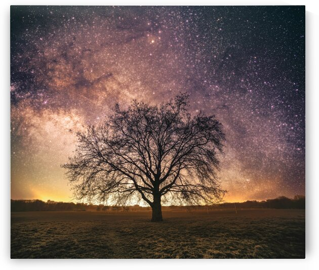 Old tree under star light - London United Kingdom by Steven Sandner