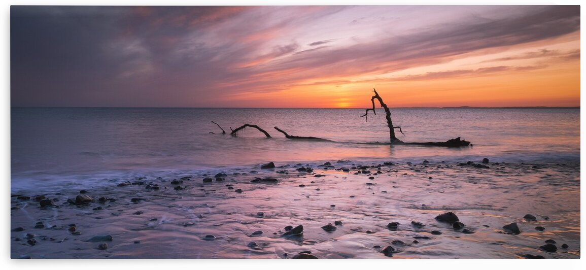Driftwood on Sker Beach by Leighton Collins