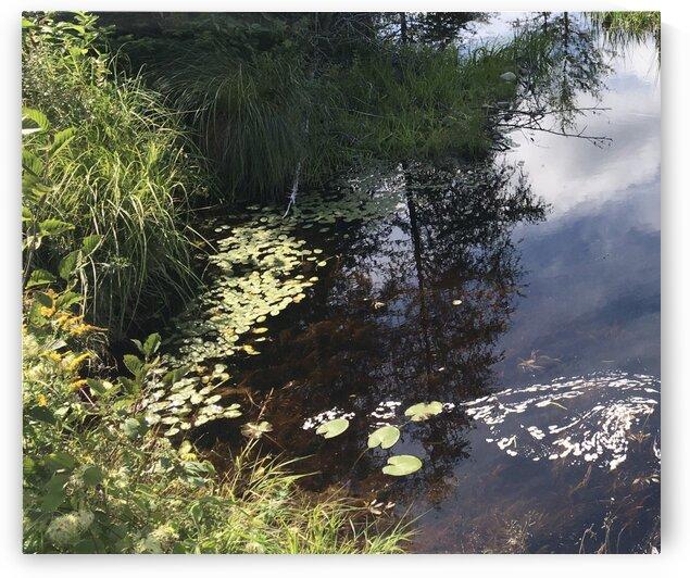 Still waters by Lorraine Downey Art