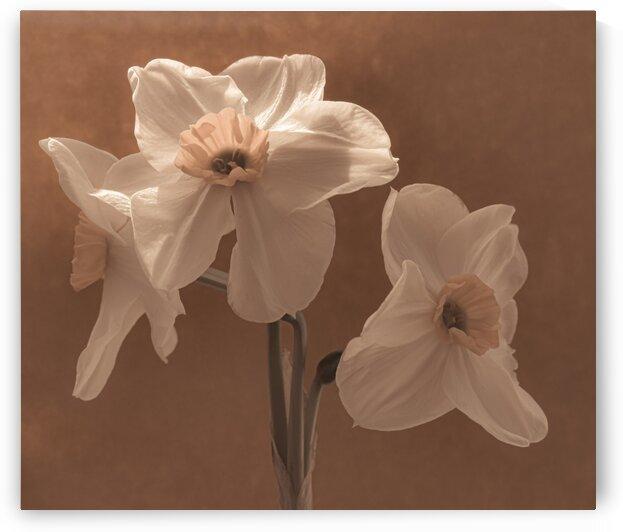Narcissus II by Sebastian Schuster