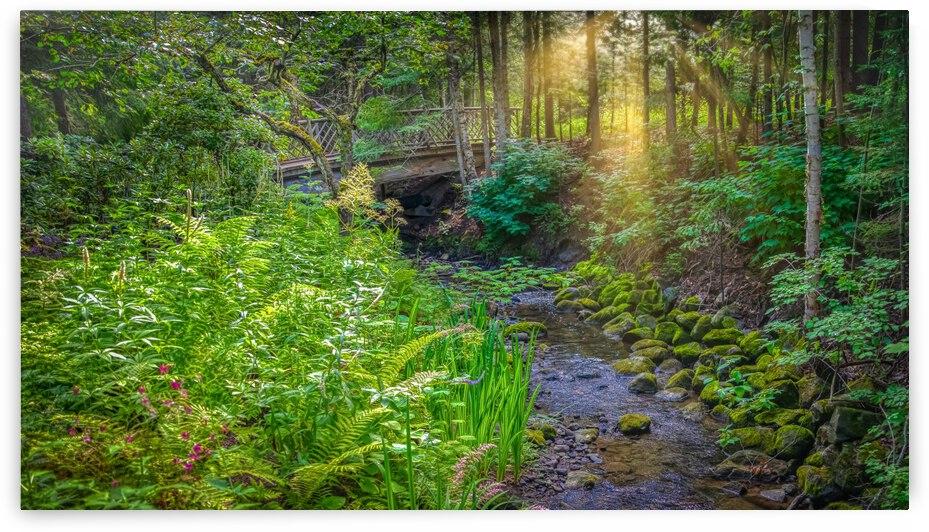 Ruisseau Jardins de Metis by Glenn Albert