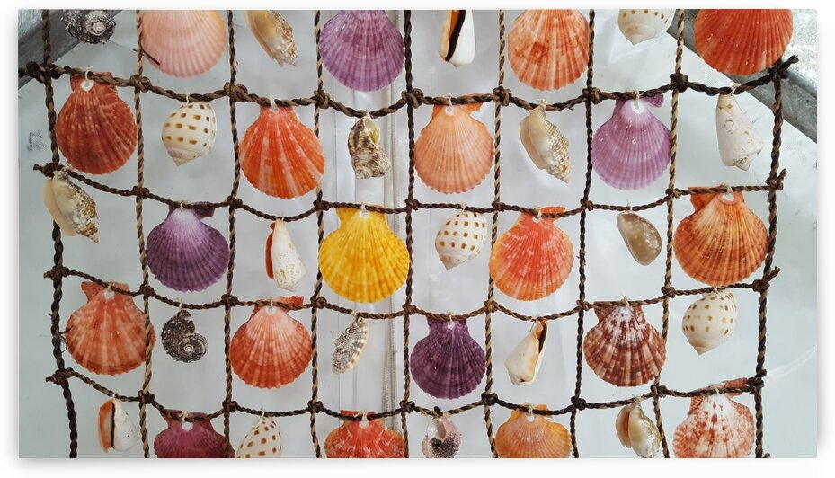 Brightly Colored Seashells Suspended on Net by Creative Endeavors - Steven Oscherwitz