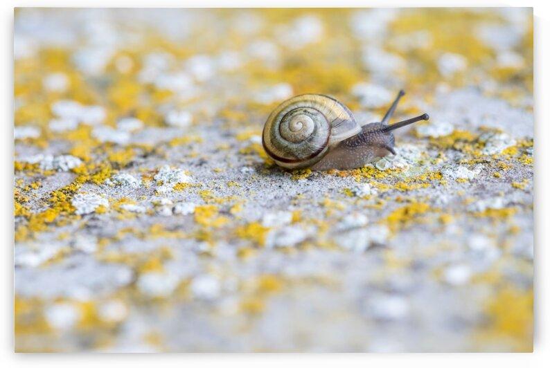 snail on the concrete wall by Marcel Derweduwen