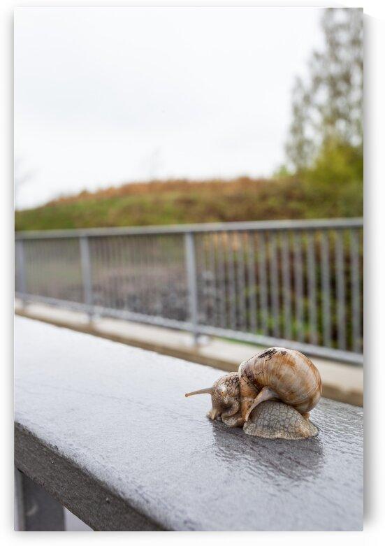an beautiful nice snail by Marcel Derweduwen
