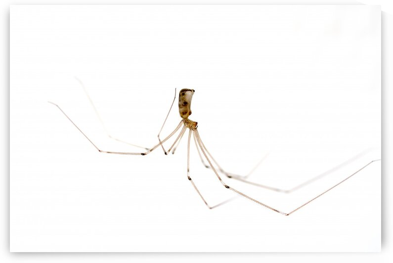 An house spider by Marcel Derweduwen
