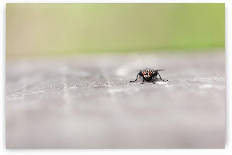 fly whit blur background by Marcel Derweduwen