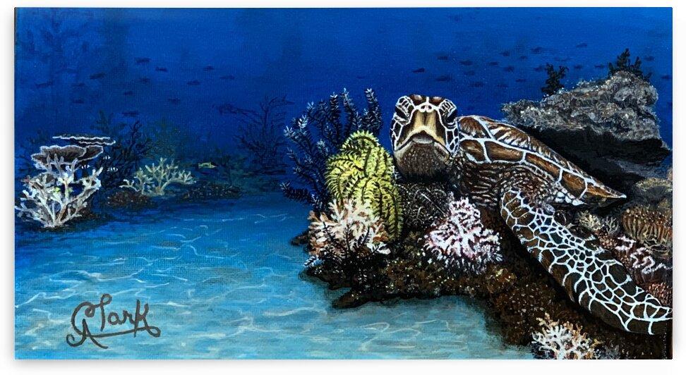 Sea Turtle by Clark Fine Art