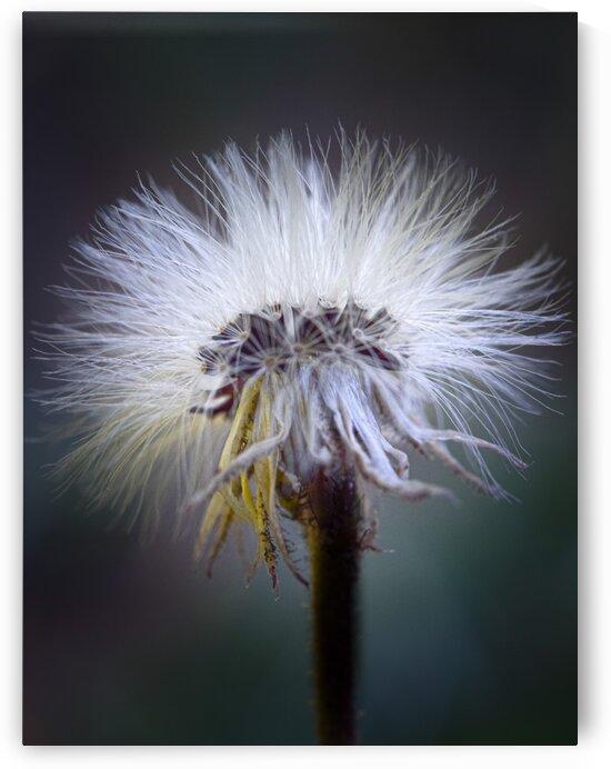 Cheveux dange by Annie St-Pierre Photographie Artiste Photographe