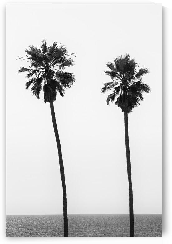 Palm trees by the sea | monochrome  by Melanie Viola