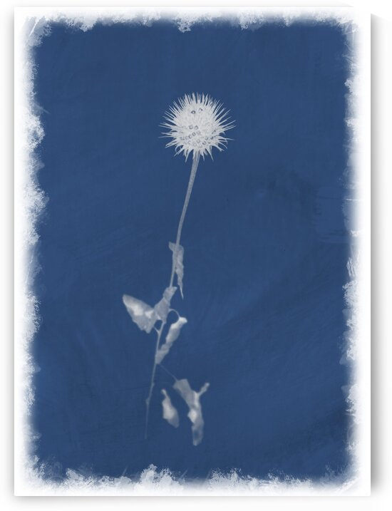 Cyanotype 101 by Christophe Modot