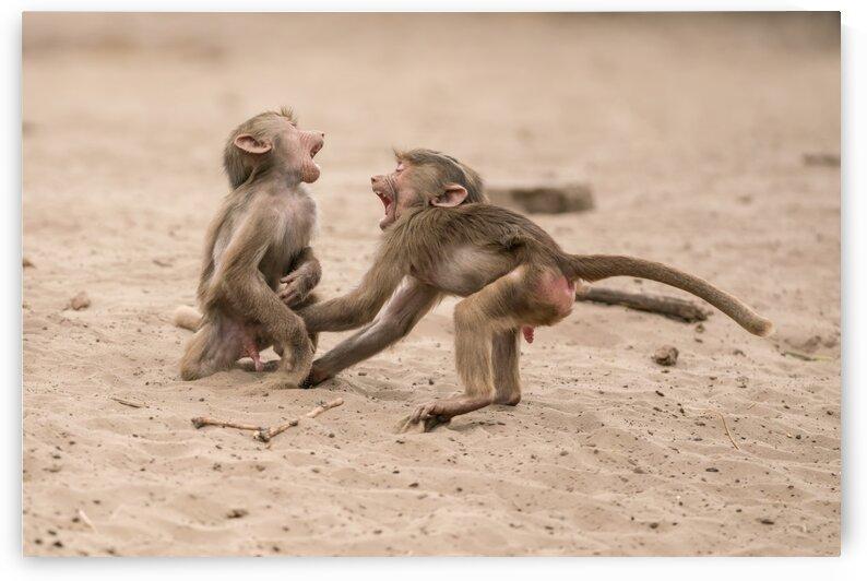 Playing baby baboon by Marcel Derweduwen