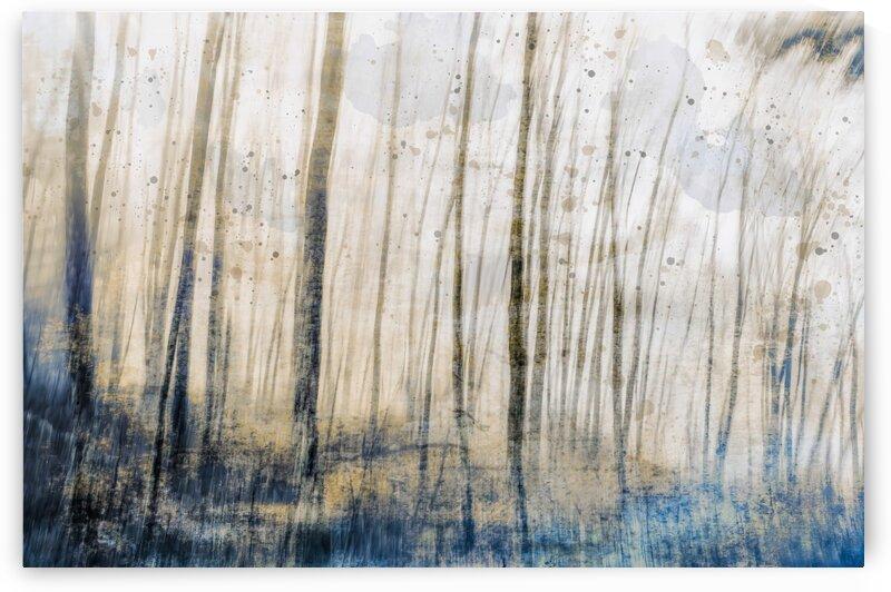 Tree Dreams in Blue by Carmel Studios