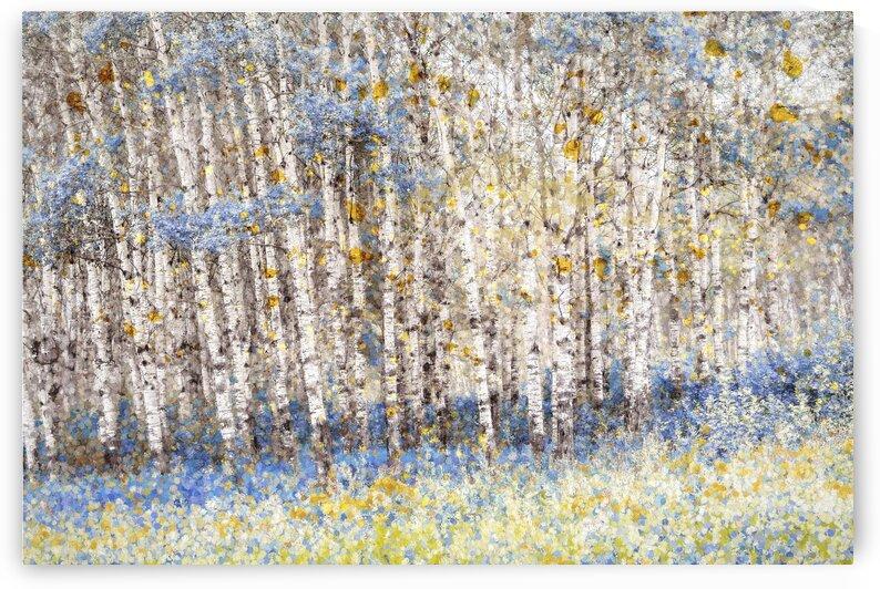 Blue Poplars by Carmel Studios