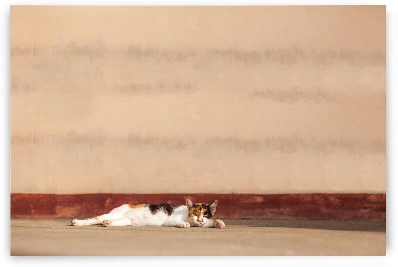 an street cat by Marcel Derweduwen