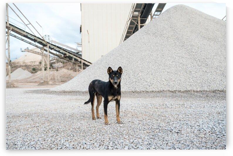 An concrete factory dog by Marcel Derweduwen