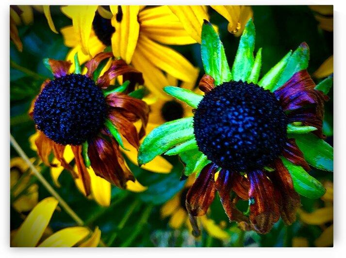 Vibrant Daisies by BotanicalArt ca