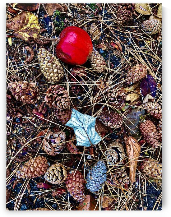 Pine Cones and Rotten Apple by BotanicalArt ca