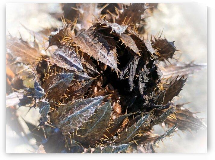 Prickly Autumn Seed Head by BotanicalArt ca