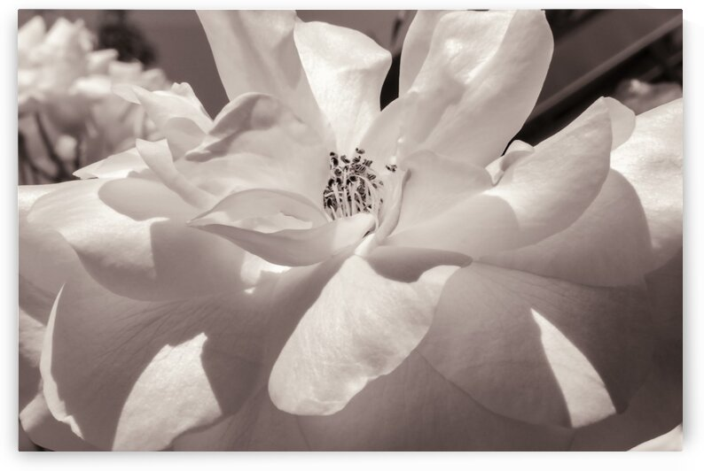Delicate Beauty by Leah McPhail