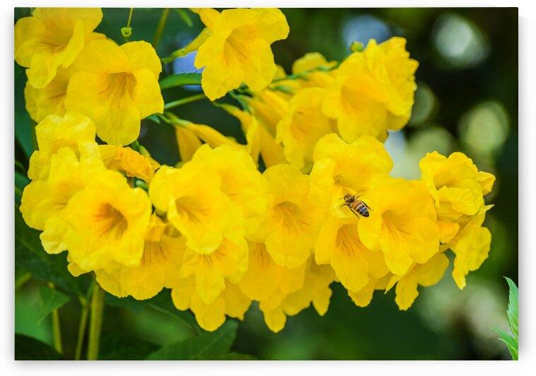 Bee Present by Robert Knaskov