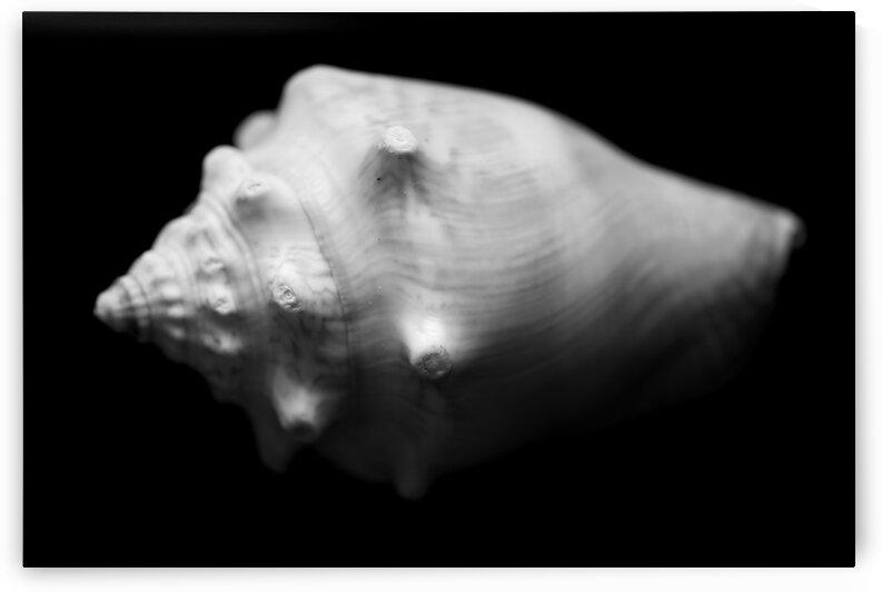 Series of shells by Andres Blasquez Mota Velasco