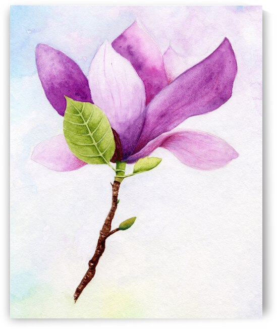 Magnolia by Feerie