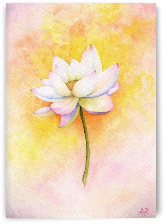 Lotus by Feerie