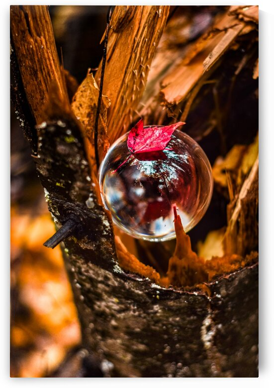 Harmomie by Annie St-Pierre Photographie Artiste Photographe